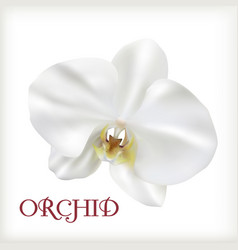 white flower orchid vector image