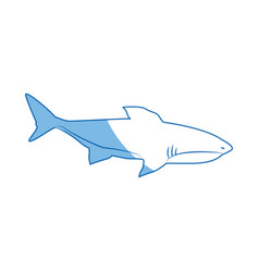 shark marine wild life nature animal vector image