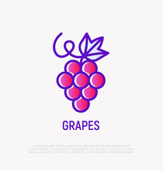 grapes with leaf thin line icon vector image