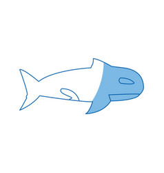 Orca whale wildlife marine aquatic vector