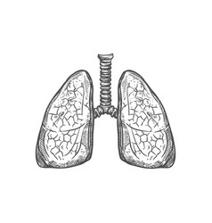 Human lungs sketch icon respiratory system vector