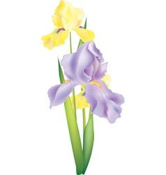 flower vector image vector image