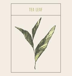 tea sprout drawn sketch vector image vector image