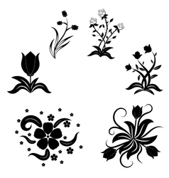 Beautiful floral with swirls vector image