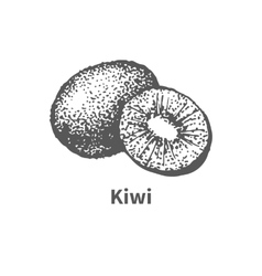 Hand-drawn kiwi vector