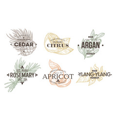 herbs spices and fruit isolated icon with vector image