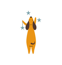 Purebred brown dachshund dog with stars funny vector