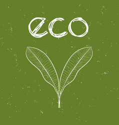 eco badge with mango leaves vector image