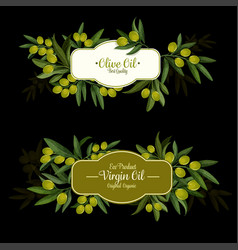 olive oil label with green branch and ripe fruit vector image