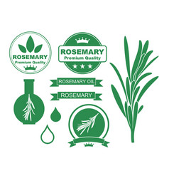 rosemary set vector image