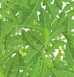 seamless texture of leaf arugula vector image
