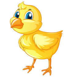 little chick on white background vector image vector image
