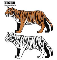 hand drawing style of tiger vector image
