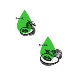 Avocado oil icon set hand drawn sketch extract vector