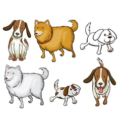 Different specie of dogs vector