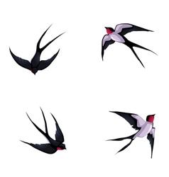 Four swallows vector