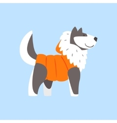 Husky Dog In Padded Coat Arctic Animal Dressed In vector image