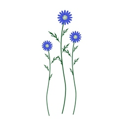 Blue Daisy Blossoms on A White Background vector