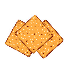 Hand drawn crackers with sesame seeds buscuit vector