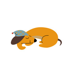 Purebred brown dachshund dog wearing cap sleeping vector