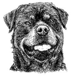 Rottweiler 02 vector