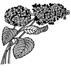 hydrangea branch vector image vector image