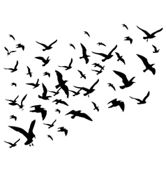 Flying birds flock isolated on vector image