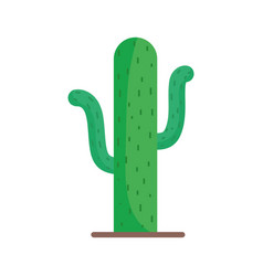 cactus desert plant on white background vector image