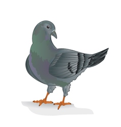 Carrier pigeon domestic breed sports bird i vector image