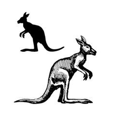 symbol australia vector image
