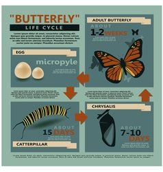 butterfly is life cycle vector image