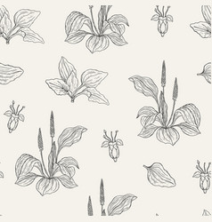Natural seamless pattern with flowering plantains vector