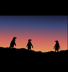 silhouette of penguin at night landscape vector image