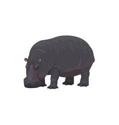 Hippopotamus african safari zoo hunt wild animal vector