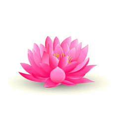 Pink lotus flower isolated on white background vector