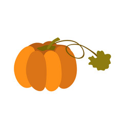 pumpkin with leaf isolated on white background vector image