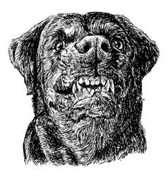 Rottweiler 07 vector