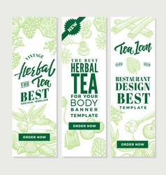 Sketch healthy tea vertical banners vector