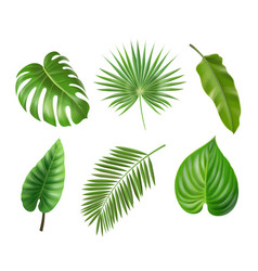 tropical palm leaves set isolated vector image
