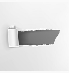 torn paper with curls realistic hole in vector image