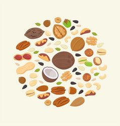 big collection nuts and seeds in circle form vector image