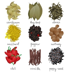 Different spices set vector