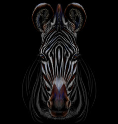 realistic color portrait zebra on a black backg vector image