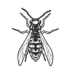 Wasp insect sketch vector