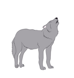 wolf howls image in color vector image
