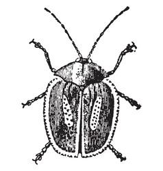 Longhorned tortoise beetle vintage vector