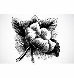 woodcut flower vector image vector image