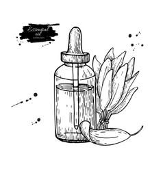 sage essential oil bottle and sage leaves hand vector image