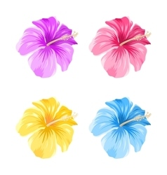 Set of Colorful Hibiscus Flowers Blossom Isolated vector