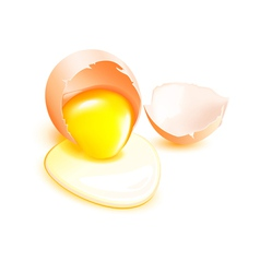 Brown broken egg with flowing yolk on white vector image vector image